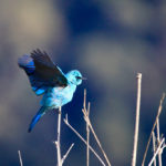 This region is a paradise for bird watching