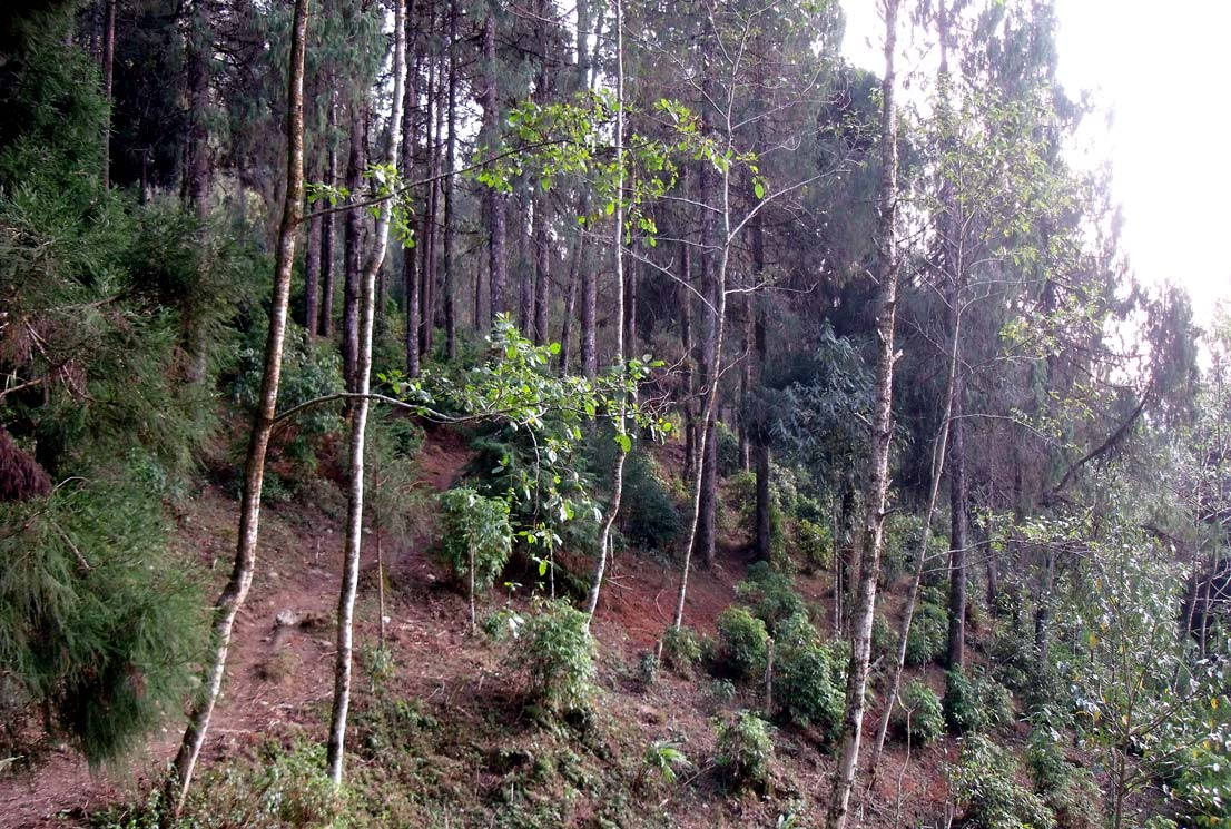Trekking route to Sillery Gaon from Echhey Gaon