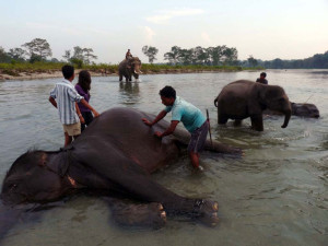 Dhupjhora Elephant Camp at Murti River