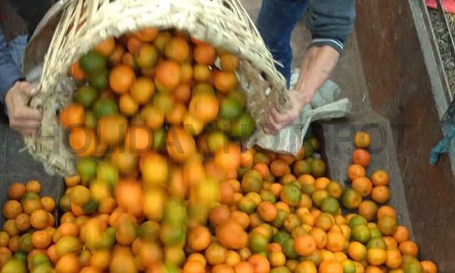 Oranges at Sittong