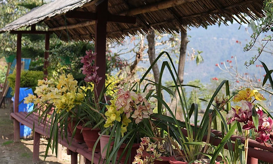chisang The Wildwoods Homestay orchids decoration